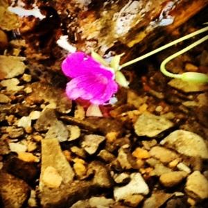 blomma igen