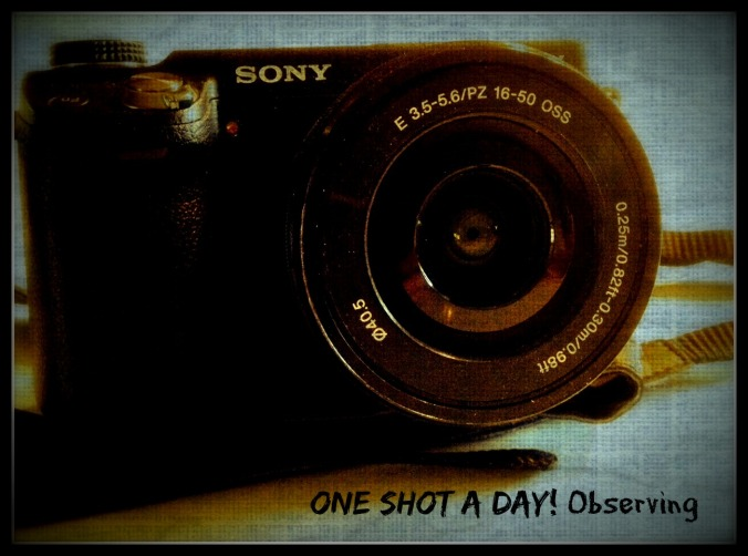 one shot a day
